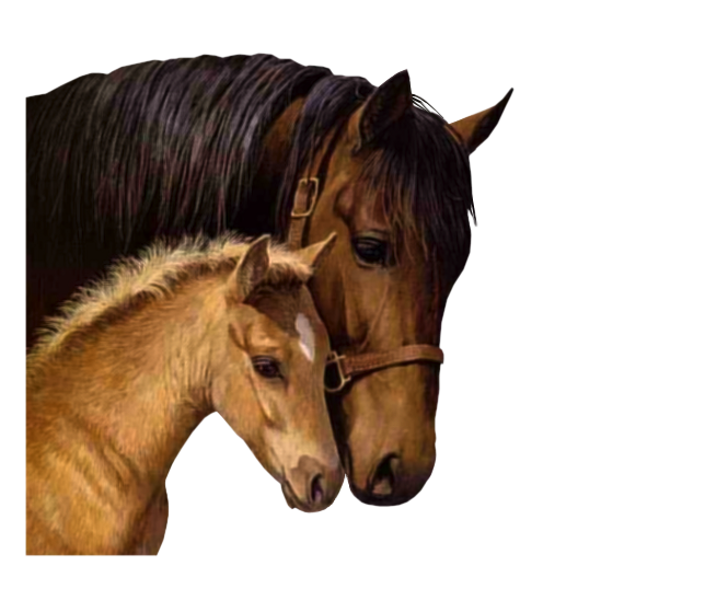 صور خيول رائعه 1ex4gpz9