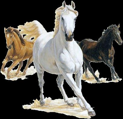 صور خيول رائعه 5aqievj9