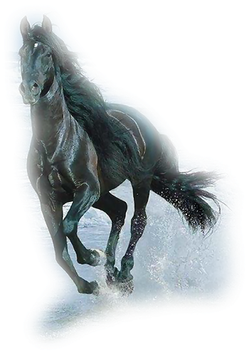صور خيول رائعه Irgwvia2
