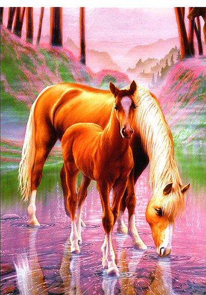 صور خيول رائعه Q2oz7kou