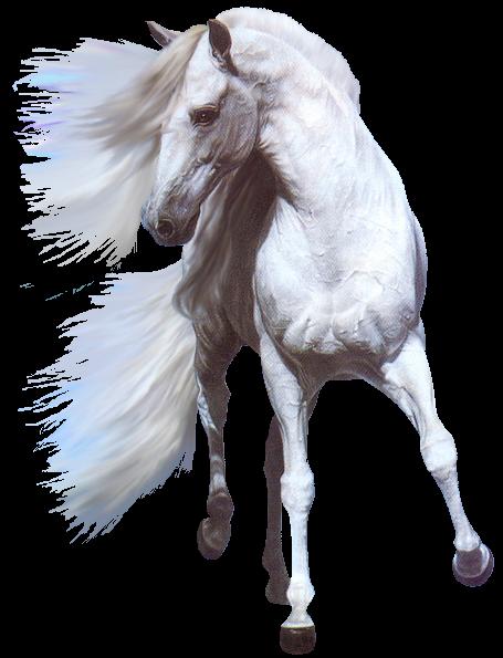 صور خيول رائعه Vzh3x5pj