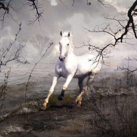 صور خيول رائعه Yndiple4